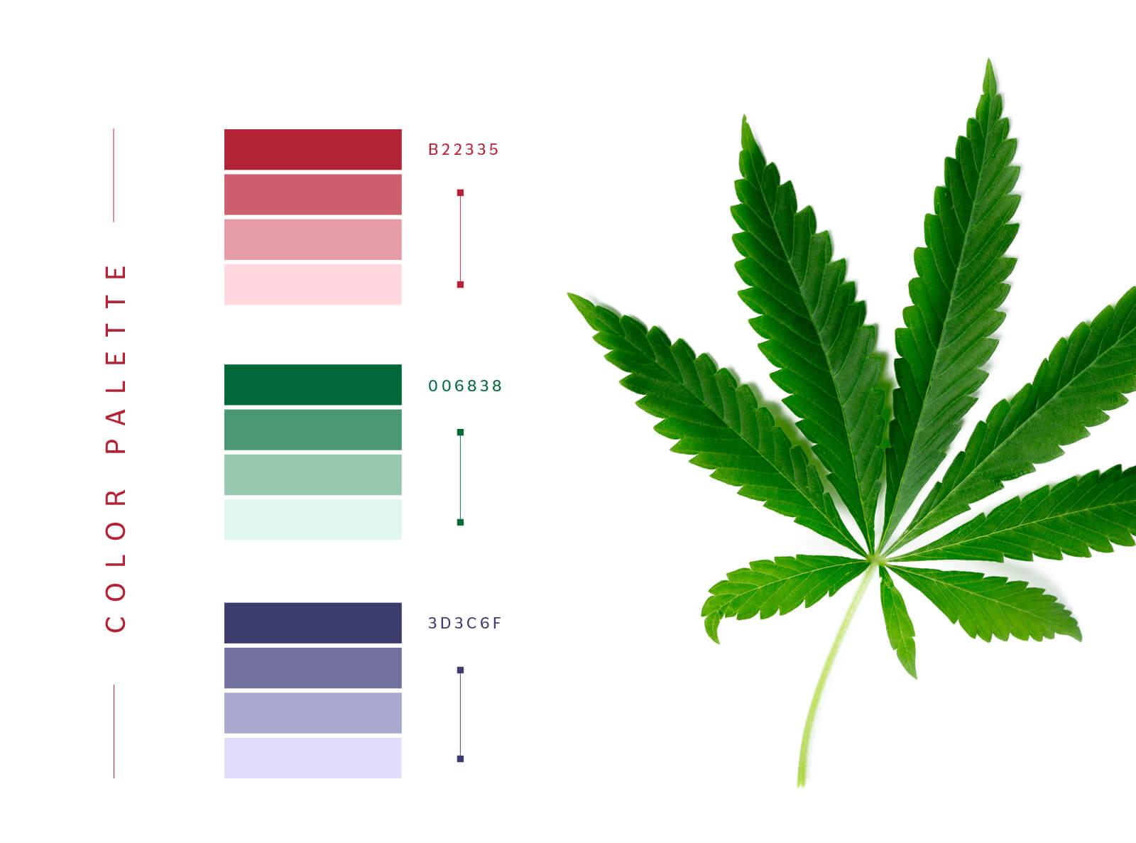 A-MFM's Color patterns